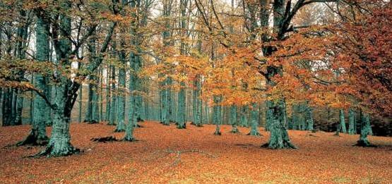 La Selva de Irati (Foto Turismo Navarra)